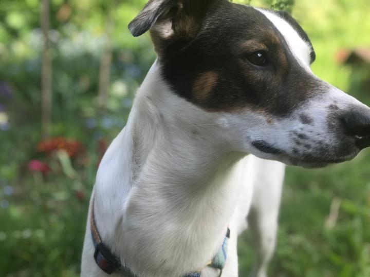 Historia leśnego psa(fragmenty)